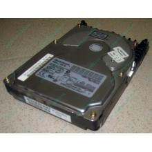 Жесткий диск 18.4Gb Quantum Atlas 10K III U160 SCSI (Махачкала)